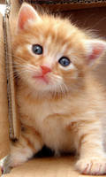 Little cutey by Biljana1313