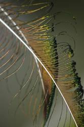 Feather by swordart