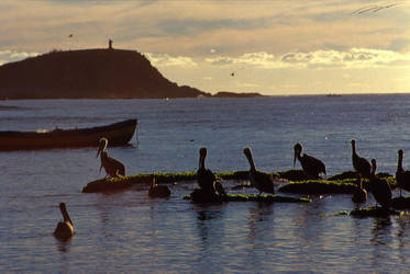 Pelicans by swordart