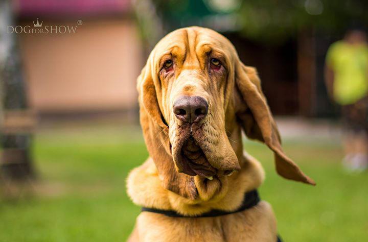 Monty by budwar65