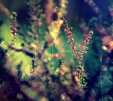 ...Wrzosy... by BaxiaArt