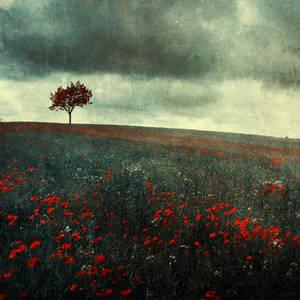 bloody field by BaxiaArt