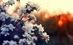 sundown by BaxiaArt