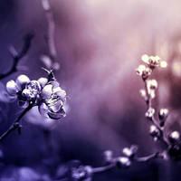 ... purple by BaxiaArt