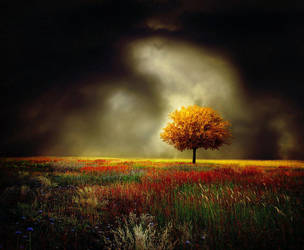 yellow tree by BaxiaArt