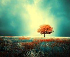 light by BaxiaArt