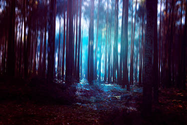 forest light II by BaxiaArt