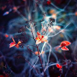 frozen memories by BaxiaArt