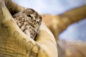 Owl by Ashgaan