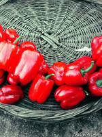 Pepper by seainside