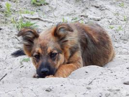 Dog by resh11ka