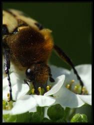 Swig Nectar by Socrahcat