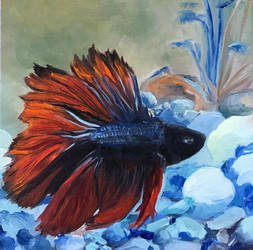 Meet Pish - Betta fish. by IMG-format