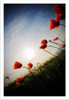 Summer breeze by gonzofoto