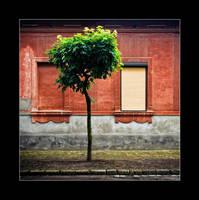 false window by gonzofoto