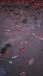 Leaves by Sakibanu