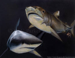 The Beautiful Bull Shark by styx-leagon