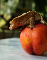 Crested Gecko and Peach by styx-leagon