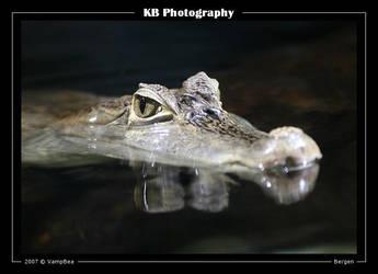 Crocodile II by VampBea