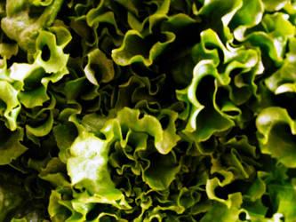 lettuce01 by lynzieicons
