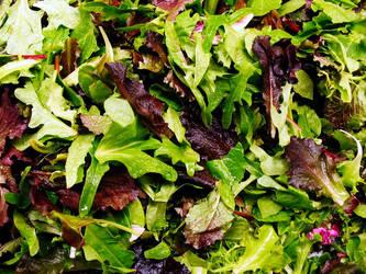 lettuce02 by lynzieicons