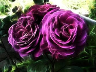 rose fractalius by slicerone