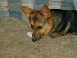 Winnie Dog by Horsey-Girly