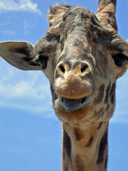 Giraffe by bladesfire