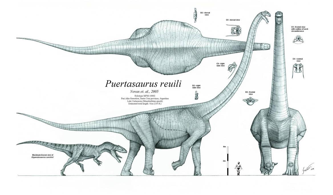 Puertasaurus reuili by Paleo-King