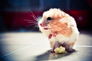 syrian hamster three by apples-parachute