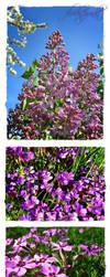 waiting for spring - violet by Fluchtpunkt