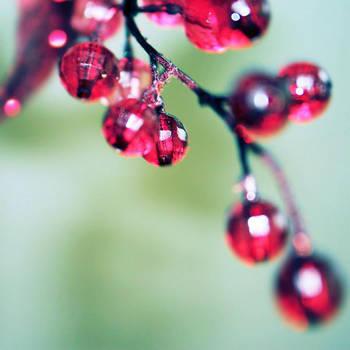 Pink paradize II by Ambyon