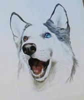 The Happy Husky by Jaylynessa