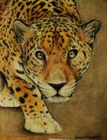 Spots by Jaylynessa