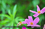 Flowers - HDR by TheBishounen55