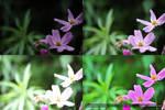 Flowers - Comparison by TheBishounen55