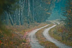 backwoods by Zi0oTo