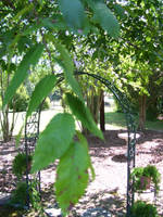 Hidden Grove by Mornauto