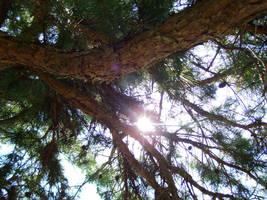 Evergreen Sunshine by Mornauto