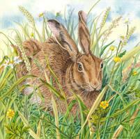 Brown Hare by LynneHendersonArt
