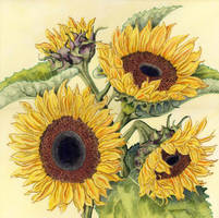 Sunflowers 1 by LynneHendersonArt