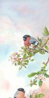 Bullfinches on Apple Blossom by LynneHendersonArt