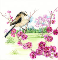 Longtailed tit on cherry blossom 2 of 4 by LynneHendersonArt
