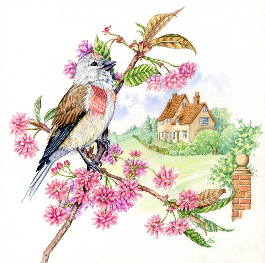 Linnet on cherry blossom 4 of 4 by LynneHendersonArt