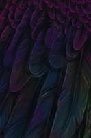 Feather Detail by MischievousRaven