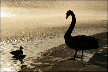 This is our Swan Song by DeMilz