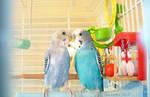 Love birds by MacKennaRose