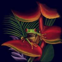 red eyes frog by SergioGM