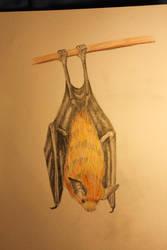Fruit Bat by Gluzzbung
