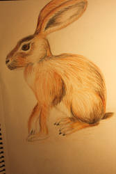 Hare by Gluzzbung